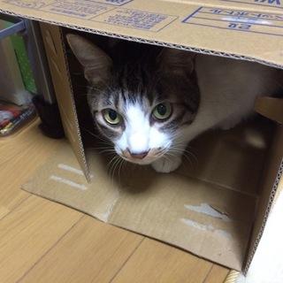 甘えん坊、怖がり猫ちゃんです。