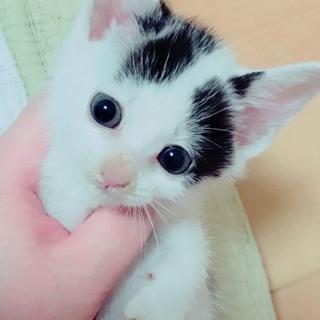 黒い瞳の白黒♂