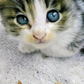 急募します。可愛い女の子猫ちゃん