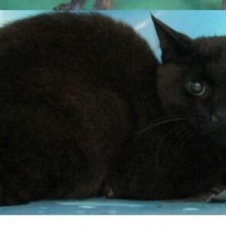 時間がありません 可愛い黒猫です