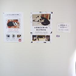 カッパちゃん写真展に行きました!