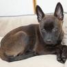 黒い瞳が愛くるしいぺぺ君、賢い子犬です サムネイル3