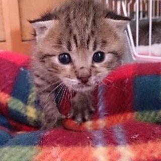 可愛い赤ちゃん猫