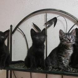 猫の方舟里親会・多頭飼育崩壊の猫と子猫