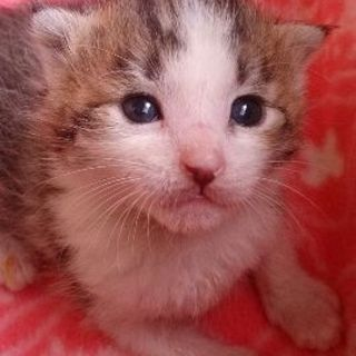 生後3~4週の赤ちゃん猫