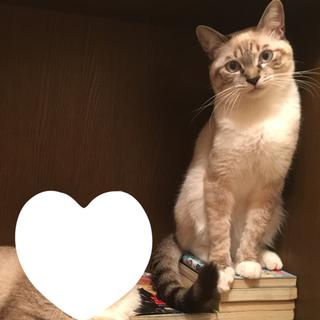 生後1年の猫ちゃんです