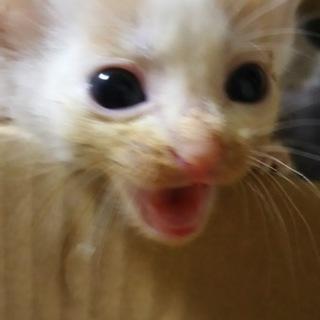 甘えん坊子猫ちゃん