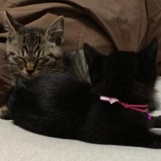 キジくんとクロちゃんの兄妹猫