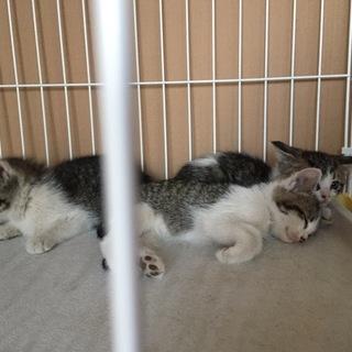 子猫11匹(生後1ヶ月)里親募集