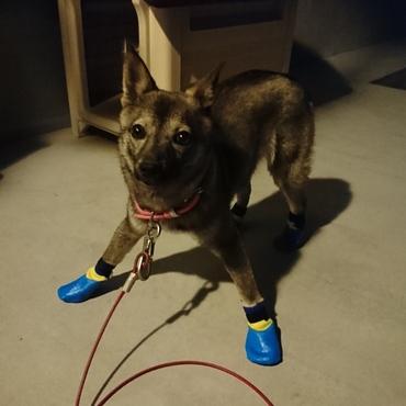 マルコの靴