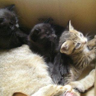 生後一ヶ月の子猫3兄妹です。