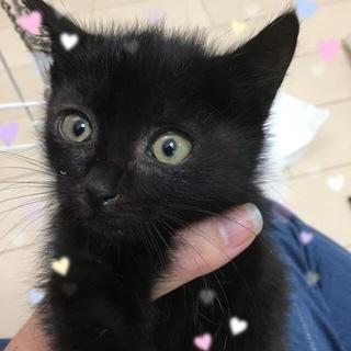 フワフワの黒猫 3ヶ月 トド松くん