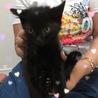 フワフワの黒猫 3ヶ月 トド松くん サムネイル2