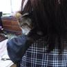 呉の猫ボラ
