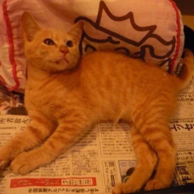 呉の猫ボラのカバー写真