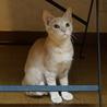 洋猫MIXゆずくん、完璧な人なれ、医療済