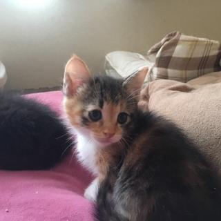 生後一か月の子猫