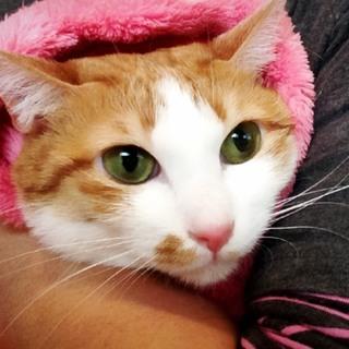 ★オス猫大好きの美人猫★2匹目に!