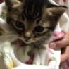 生後1ヶ月頃の仔猫の里親さん募集してます