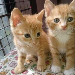 第15回 ふくねこや。。neko部 保護猫さとおや会