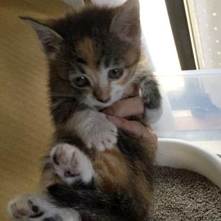 困り顔がかわいいたれ目子猫です