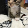生後3週間の仔猫の里親募集!