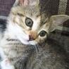 子猫が生まれました!!