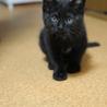 人懐こい黒猫ちゃんワグです。