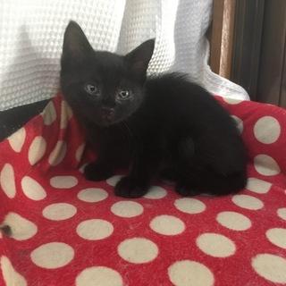 慣れ慣れ可愛い黒猫1ヶ月