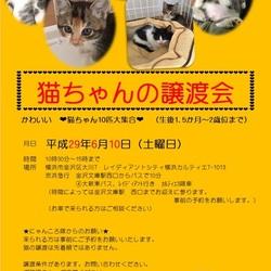 猫の譲渡会 byにゃんころ隊