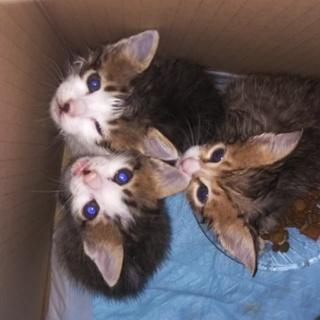【子猫里親募集】捨てられていた子猫を保護しました