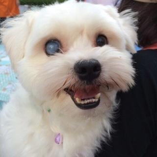 「タンバリン」人が好きな甘えん坊。犬もOK!