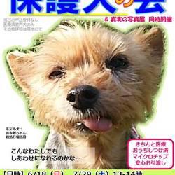GO!保護犬の会in富士山・小山町 冷房完備