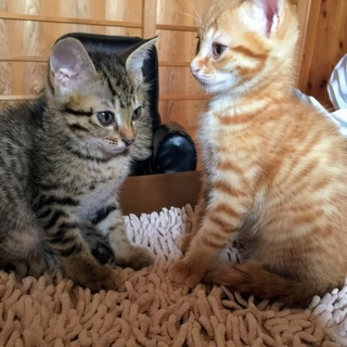 子猫4兄弟2カ月