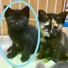 黒猫 ♪ 2ヶ月位