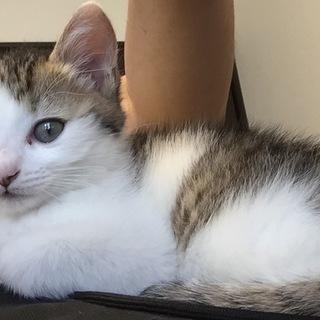 生後約2ヶ月の子猫ちゃん