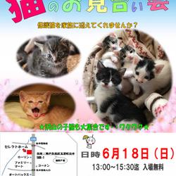 神戸西区 猫のお見合い会