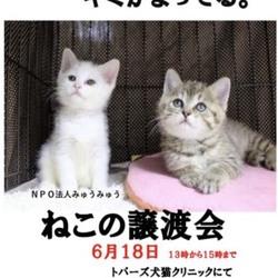 第4回NPO法人みゅうみゅうの猫の譲渡会