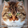 Save dogs&cats JAPAN