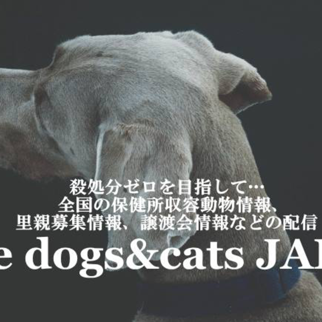Save dogs&cats JAPANのカバー写真