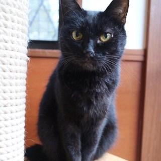【VIVI子】黒ネコ女子♪