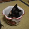 サビ猫こねこの家族になってください。