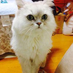 猫の長期お預かりについて