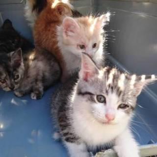 子猫五匹、二匹は家族が出来ました!