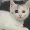 NPO法人 茨城県・犬猫共存推進会