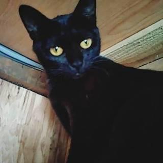 ありがとうございます。黒猫クロちゃん