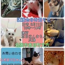 猫の譲渡会三重県名張市 ひだまりにゃんこ