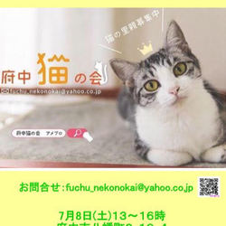 猫の譲渡会、開催【府中猫の会】