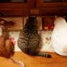 三匹のネコママさん