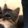 生後2ヶ月の子猫の里親募集!元気な4兄弟!
